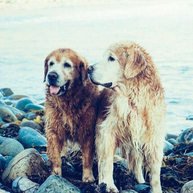 dog breeding made easy with cruzapet