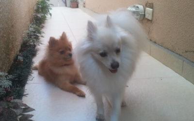 Desireé & Fred