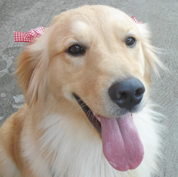 dog breeding success story - kira - cruzapet