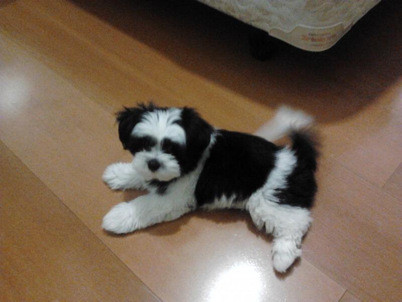 dog breeding success story - nina - cruzapet