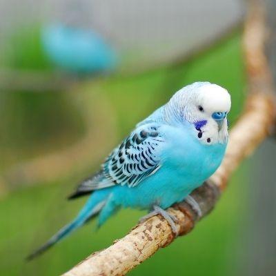 cruzapet-pet-match-mate-finder-bird