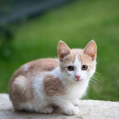 cruzapet-pet-match-mate-finder-cat
