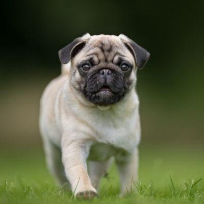 cruzapet-pet-match-mate-finder-dog