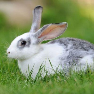 cruzapet-pet-match-mate-finder-rabbit