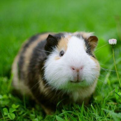 cruzapet-pet-match-mate-finder-rat
